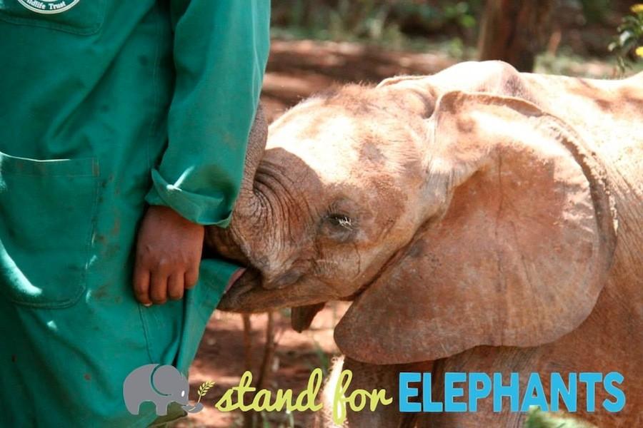 kenya-babyelephant-wwp